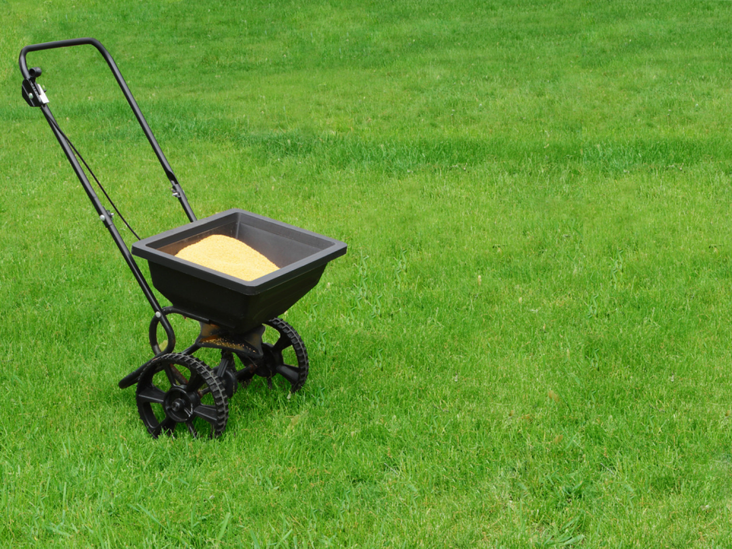 weed control services in Bloomfield, CT